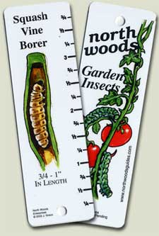 North Woods Garden Insects Guide   Northshire Bookstore